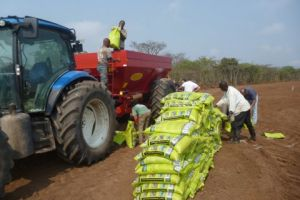 Bredal também presente em Angola na fazenda Paca, Quibala, do grupo Nuviagro